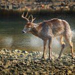 5 Deer Hunting Myths